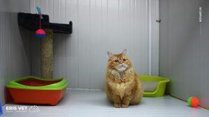 cazare pentru animale iasi