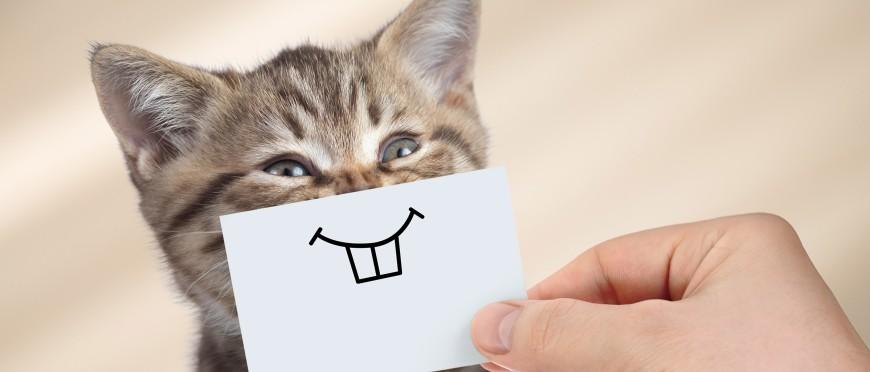 gingivita la pisici