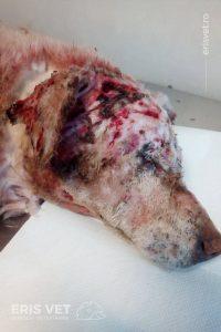 castrarea la câini